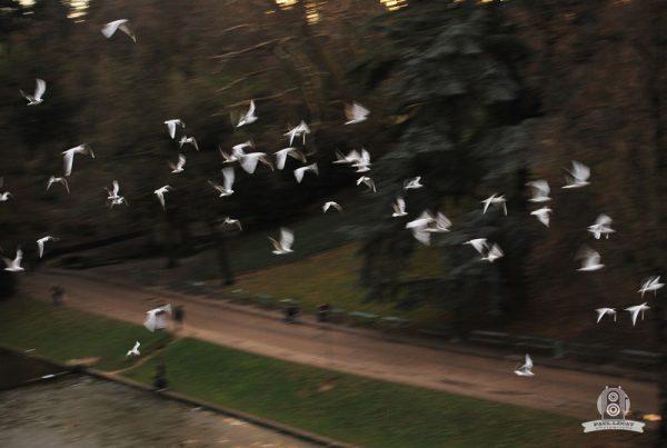 Birds passing