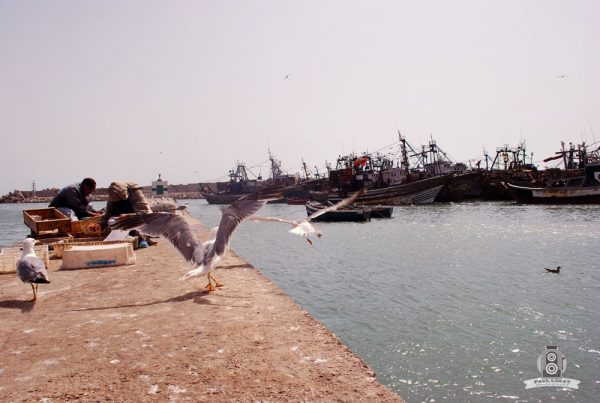 Moroccan seaside